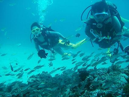 ①体験ダイビング | 奄美大島 釣り体験・シュノーケリング・体験ダイビングステーション『サラサ』