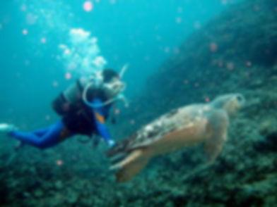 ②ファンダイビング   奄美大島 釣り体験・シュノーケリング・体験ダイビングステーション『サラサ』