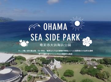 奄美市大浜海浜公園 | OHAMA SEA SIDE PARK 公式サイト リニューアル!