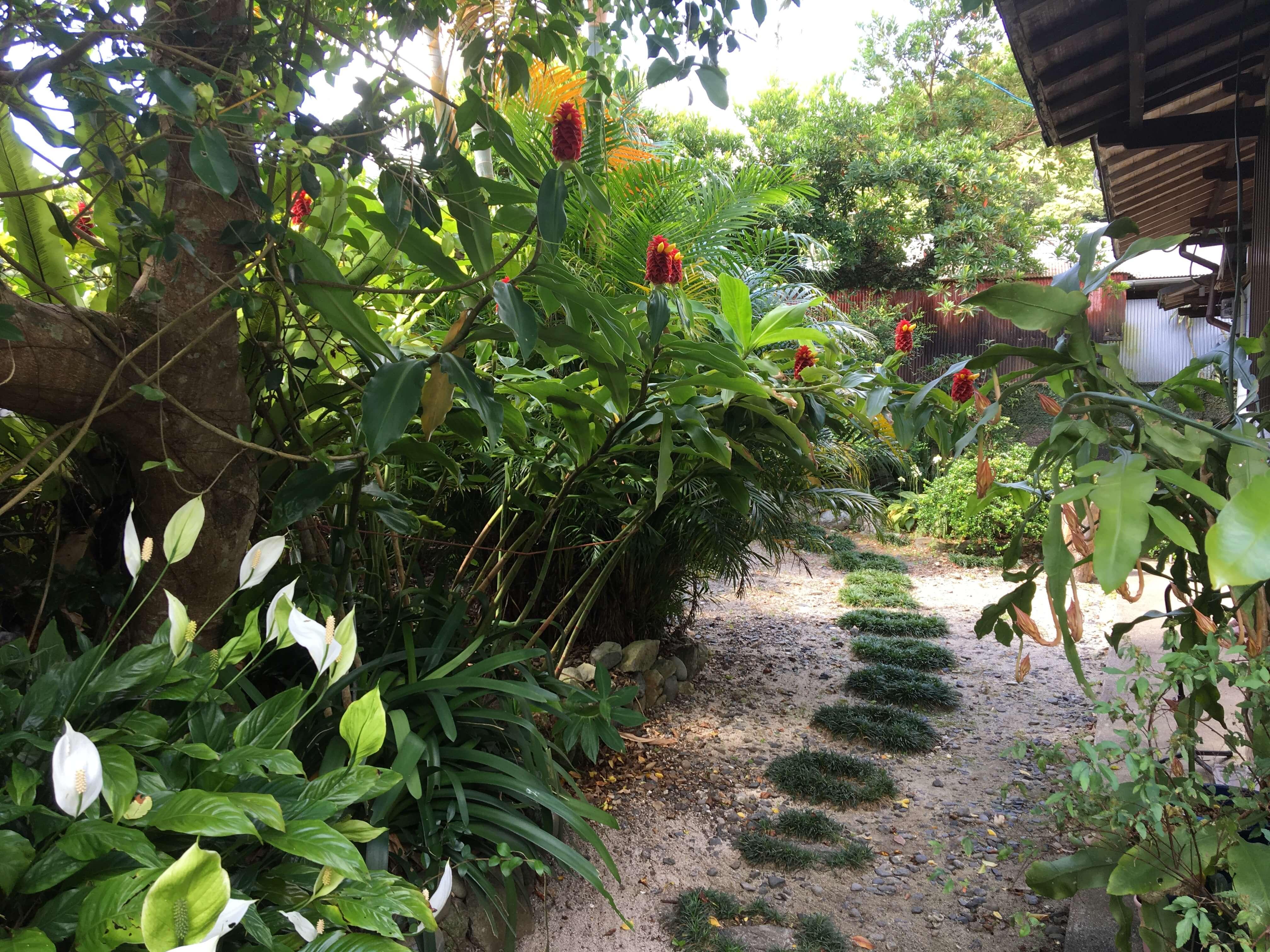 中庭への道
