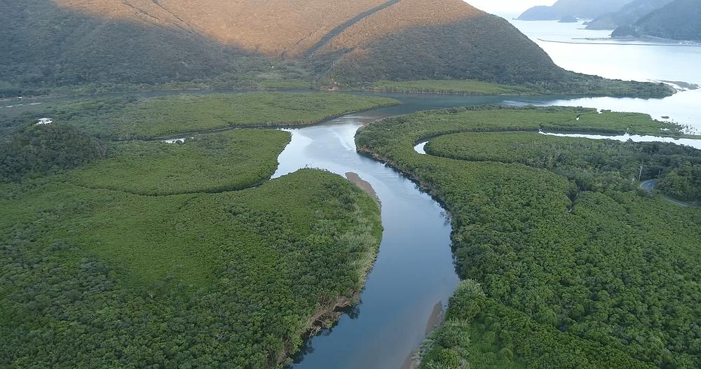 【観光コース】奄美大島 マングローブ原生林について