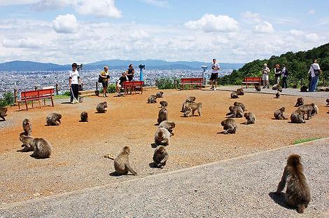 tour guide | Iwatayama Monkey Park