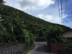 自然あふれる住用の町