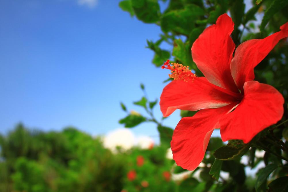 奄美大島の不動産情報をしっかりと把握して、快適な島暮らしを!
