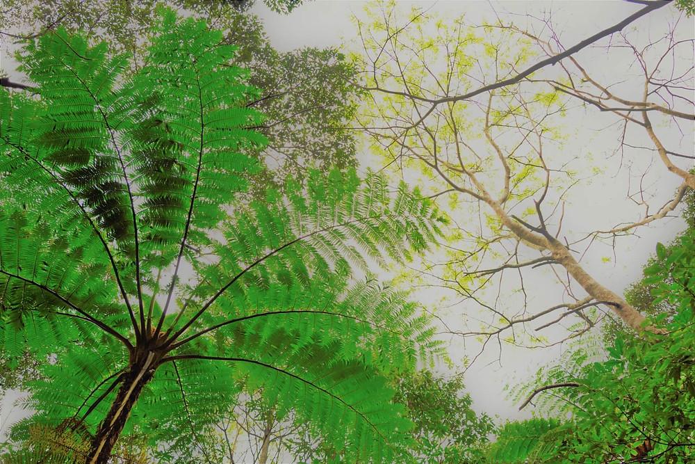 奄美大島を代表する亜熱帯の森『金作原原生林』