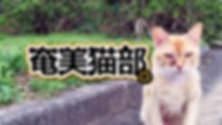 人も猫も野生動物も住みよい奄美大島へ「一般社団法人奄美猫部」