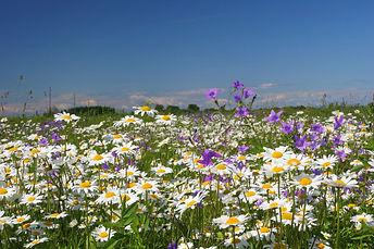 summer flower fields.jpg