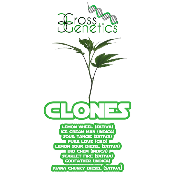 Clones Flyer.tif