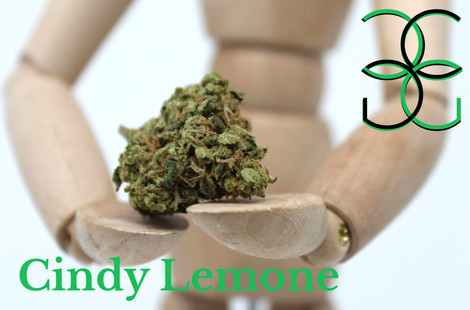 Cindy Limone