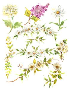 Hello Daisy Watercolor Floral Clipart