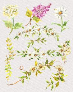 Daisies Clipart-1.jpg
