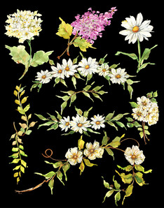 Watercolor Floral Clipart.jpg