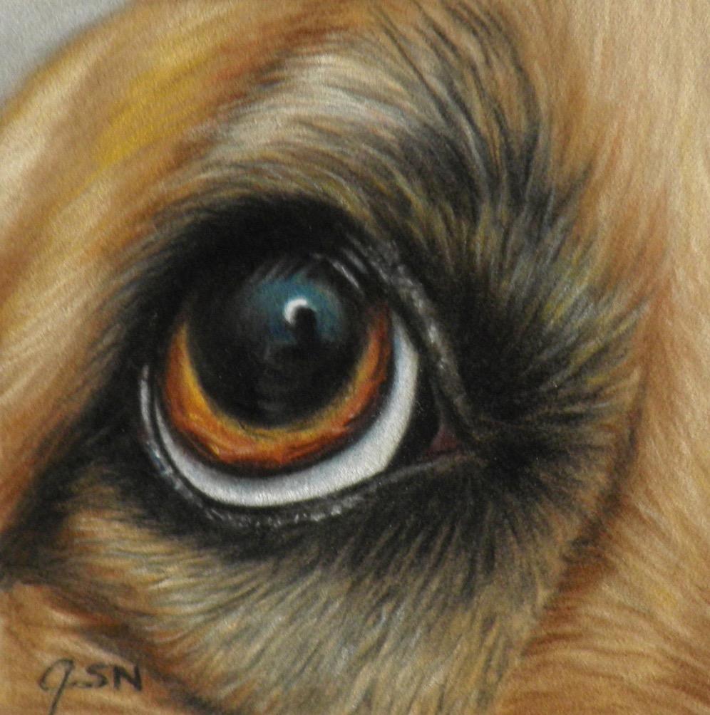 Dogs eye