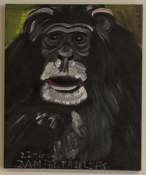 A Chimpanzee : Daniel Phillips