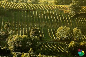 Vignoble de l'Entre-Deux-Mers