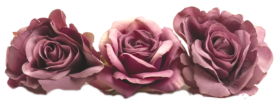 front-view-wilted-roses-purple-colored-w