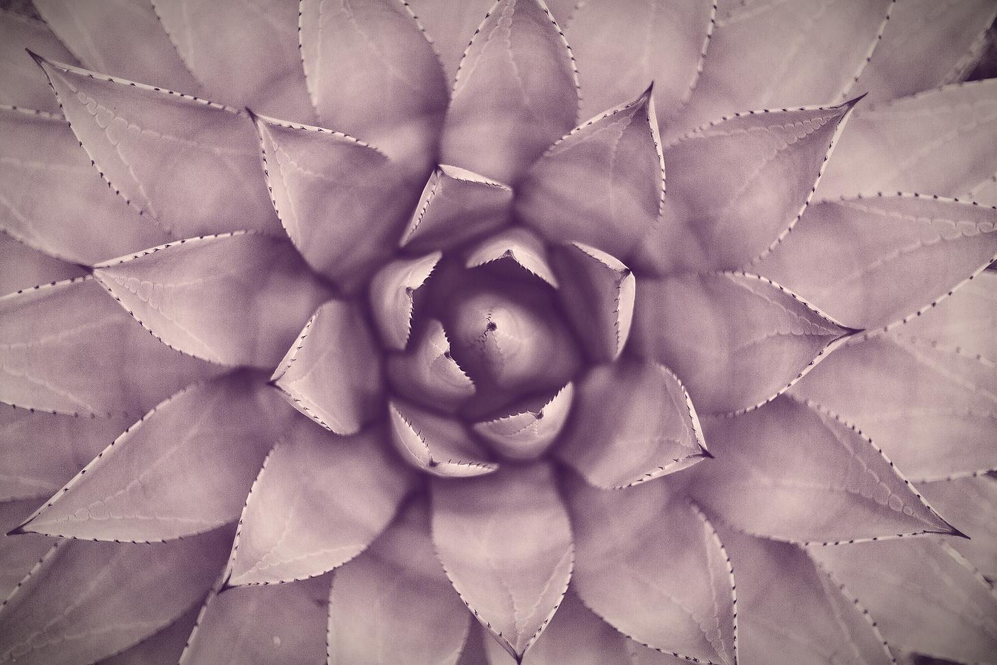 Succulent_edited_edited.png