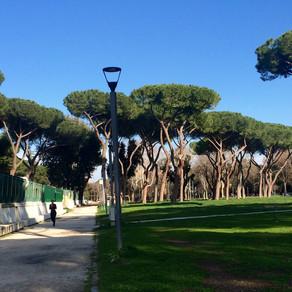 I pini di Roma