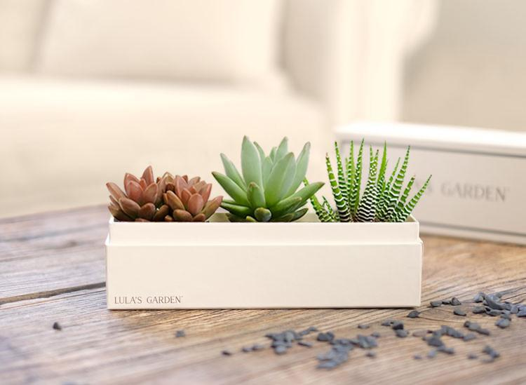 Succulent Gift from Lula's Garden
