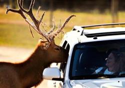 Nebraska Wildlife Safari