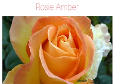 rosieamber.png
