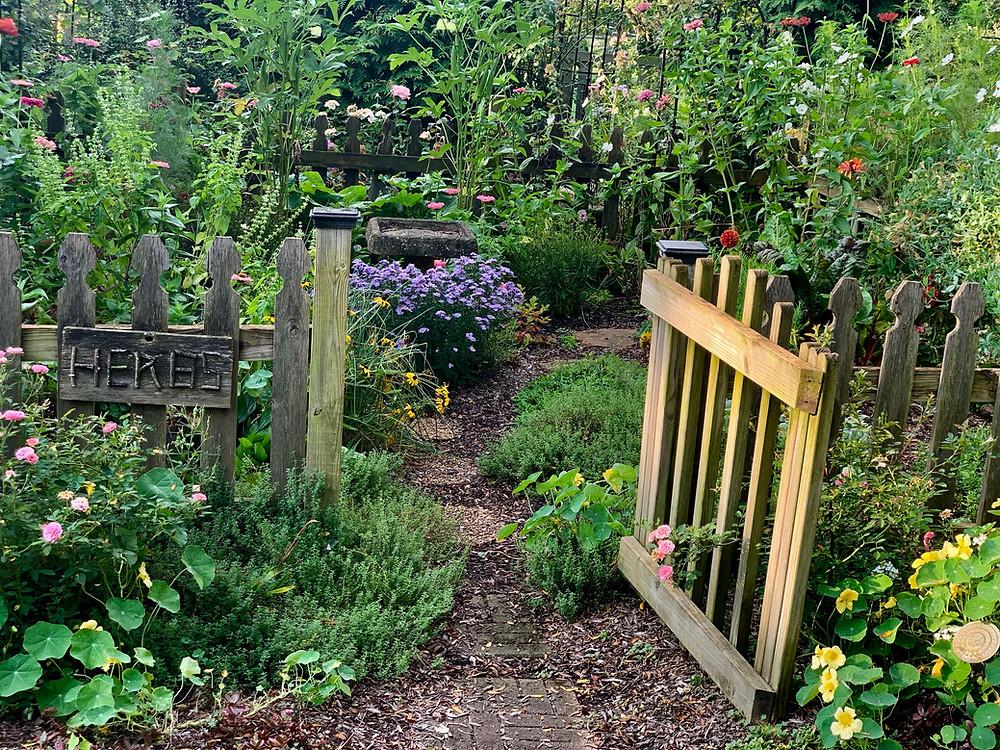 Herb garden photograph