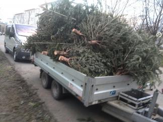 Reutlinger Weihnachtsbäume von Lemuren eingesammelt