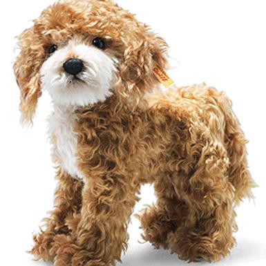 Ricky Cockapoo Dog 031557