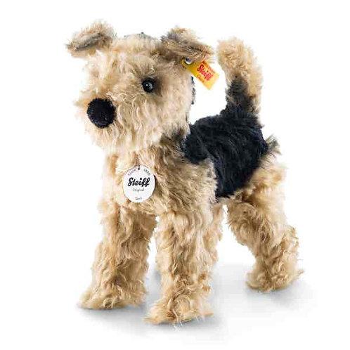 Terri Welsh Terrier 033735