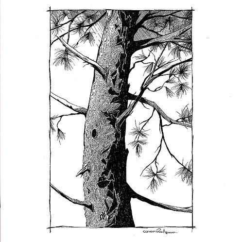 Single Tree Bark (unframed)