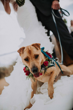 Wedding_00000379