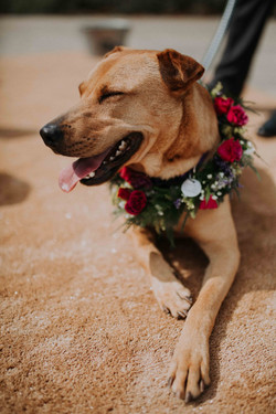 Wedding_00000266