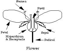 A Short Discussion of Flower Structure