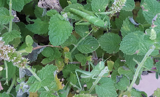 Organic Options: The Autumn Plague