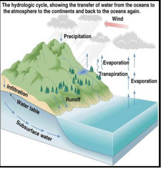 Biogeochemical Cycles of Life: The Water Cycle, Carbon Cycle, Phosphorus Cycle and Nitrogen Cycle