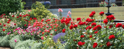 Novice Class 13-11-Simthsonian Rose Garden - Charlie Brannon