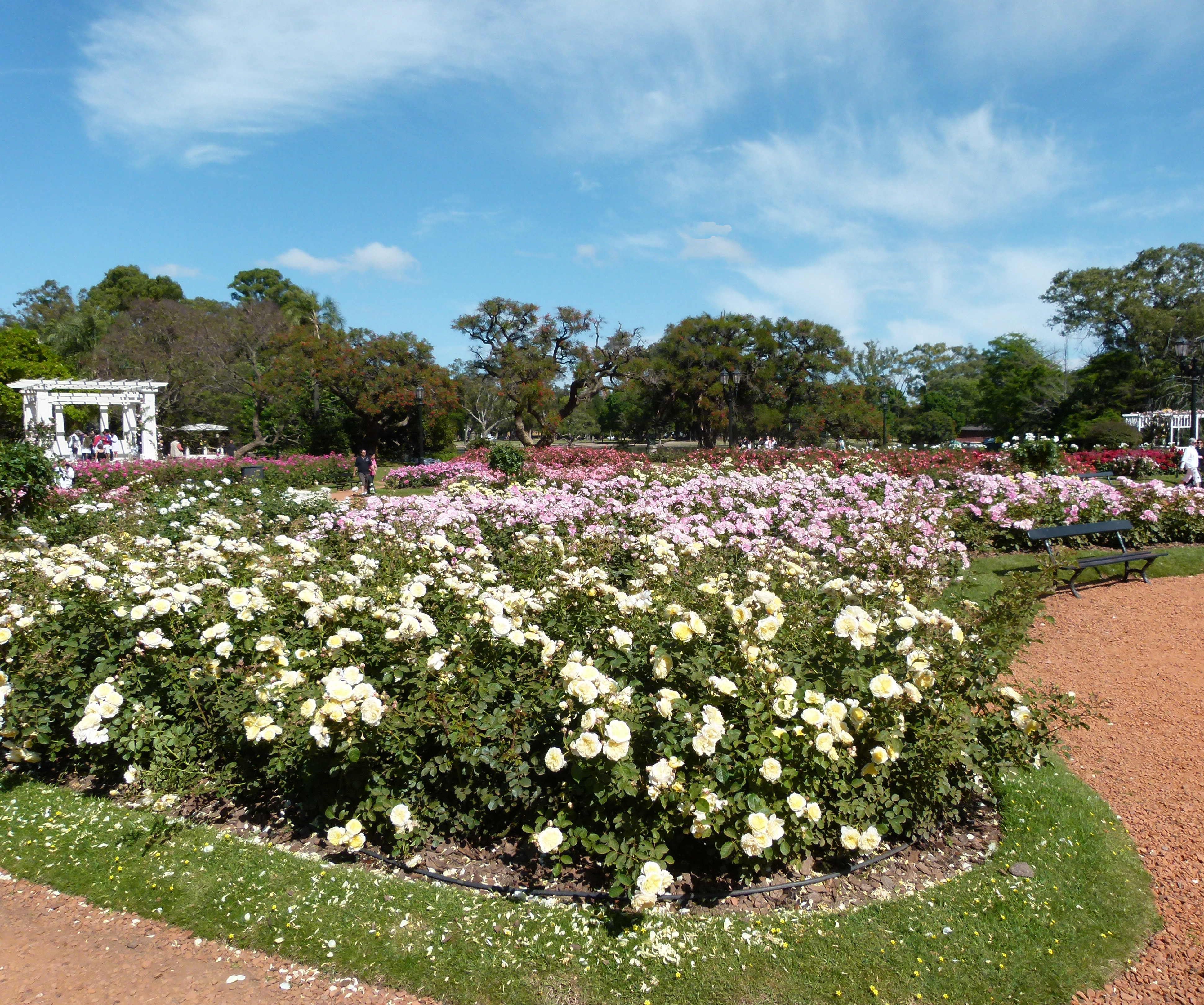2nd 10b_Carol Bowen_El Rosedal Garden