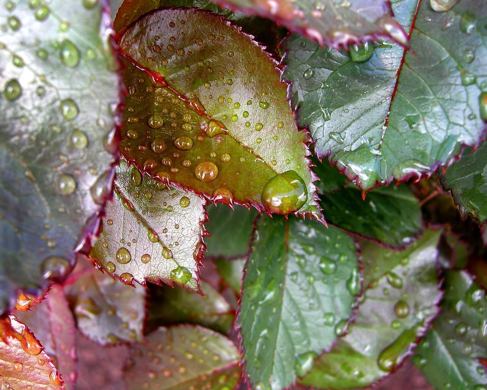 Leaves, photo Barbara Lester