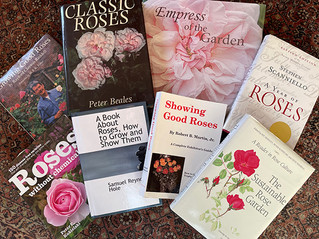 Winter Rose Reading