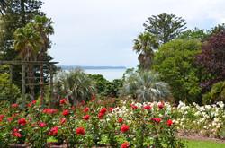 Novice Class 11-9-Parnell Rose Garden, NZ - Lynn Hunt