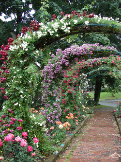 Class 12_1st Place -Walk Way E.M. Mills Rose Garden - Deborah Holihan