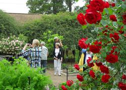 10b-31-Shreveport Rose Garden