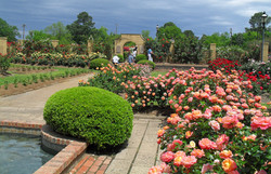 10a-31-Tyler Rose Garden