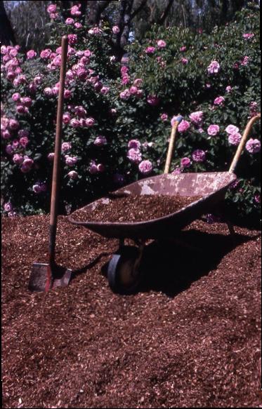Redwood compost makes good mulch, photo courtesy Beverley Rose Hopper