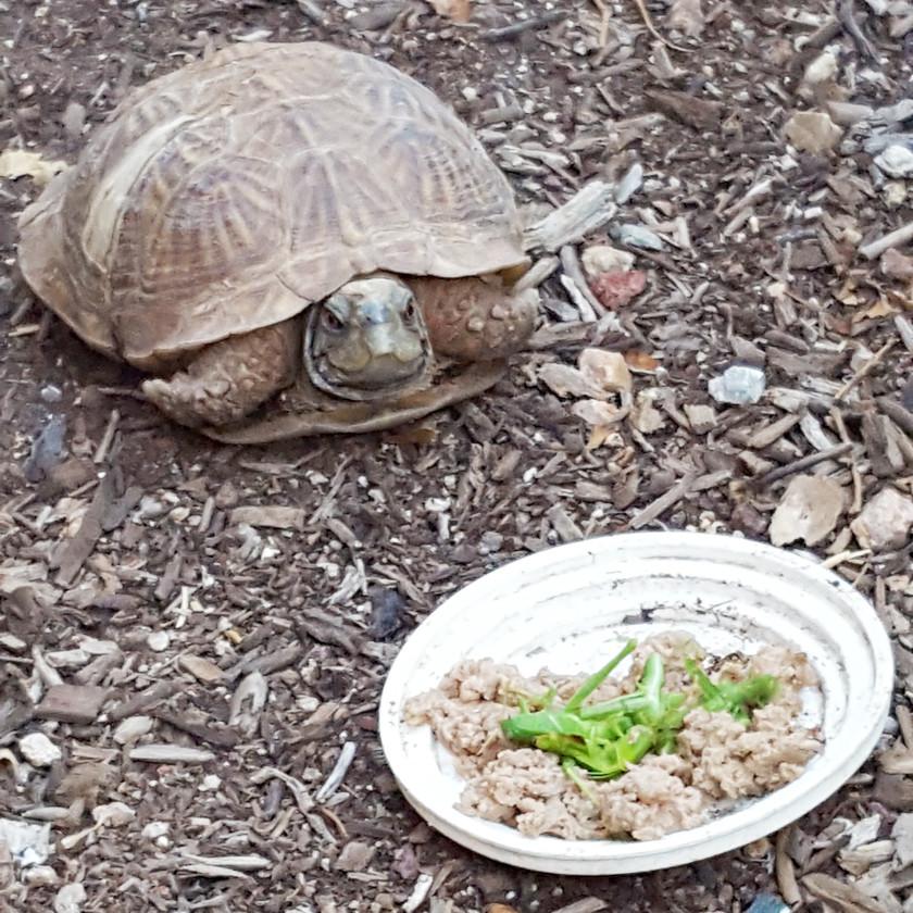 Rosie feasting on a plate of hoppers, photo Krystal Schmidt