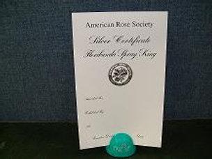 Floribunda Spray Certificate Silver