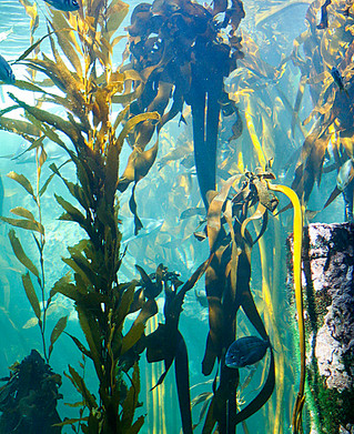 Seaweed - A Mystery and a Miracle for Plants