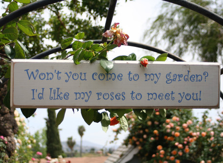 I Promise You A Rose Garden  (or Why You Should Come to the American Rose Society Fall National Conv