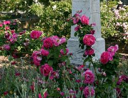 Linda Burg Sacramento Old City Cemetery