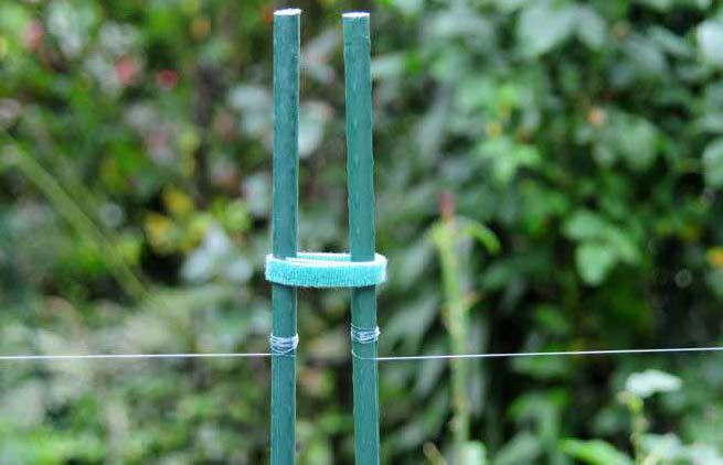 Fig 4. Close-up of poles at one side of a gate to the garden. Gate is Temporarily held closed with removable velcro loop. The fence is made using Stren Lo-Vis Green 12 lb. Fishing Line strung on 6 ft x 5/8 in green garden stakes.